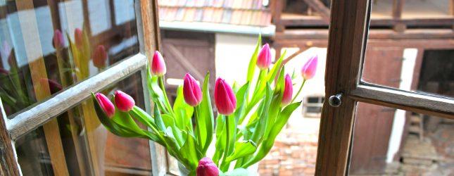 Frühlingsspecial: Jetzt 10% Rabatt Sichern